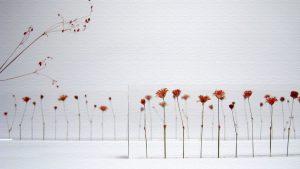 可愛らしい花が1cm間隔に並べられた定規♪贈り物として人気!
