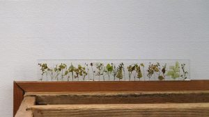 野草が並んだ美しい定規「ガーデン」プレゼントとしても人気!