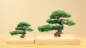 Bonsai(ボンサイ)|アクリルで作られた松の新時代盆栽